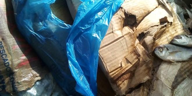 Un carton des poissons pourris quelques heures avant son incinération
