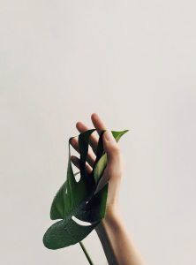 photo-of-person-holding-green-leaf-1029844