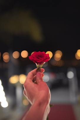 person-holding-red-rose-1324994