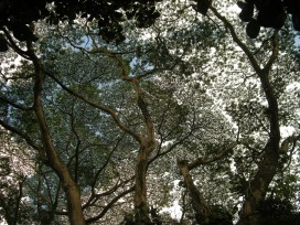 beautiful tree on the way to Manoa Falls