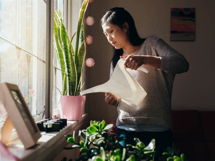 Reasons why Plants are the Best Thing to Invest in for Home Decor