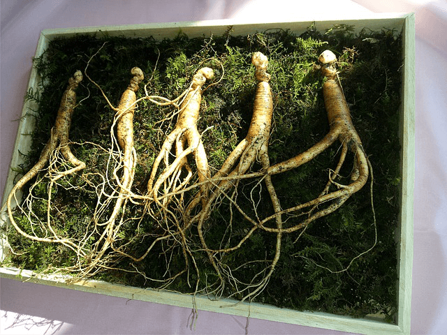 What is Ginseng Benefits to Live Healthy Life Naturally