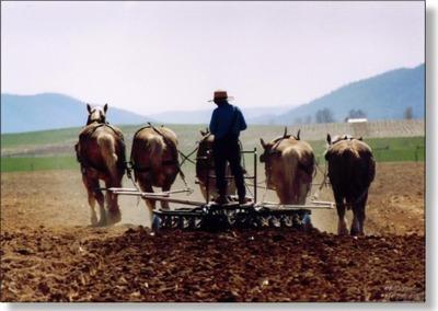Amish_plow