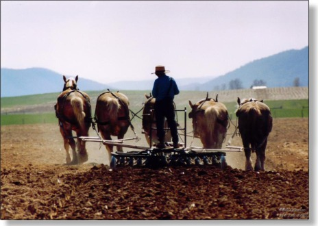 Image result for amish plow