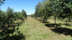 Reforestation de Kélilalina