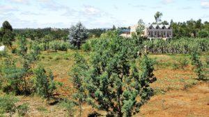 La reforestation à Kélilalina