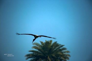01-stork-on-fly