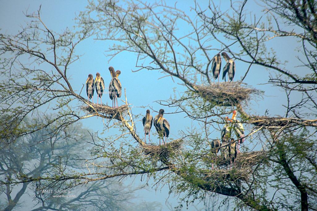 03-stork-family