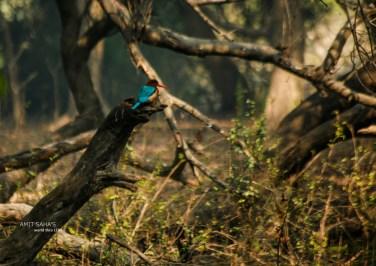 04-kingfisher