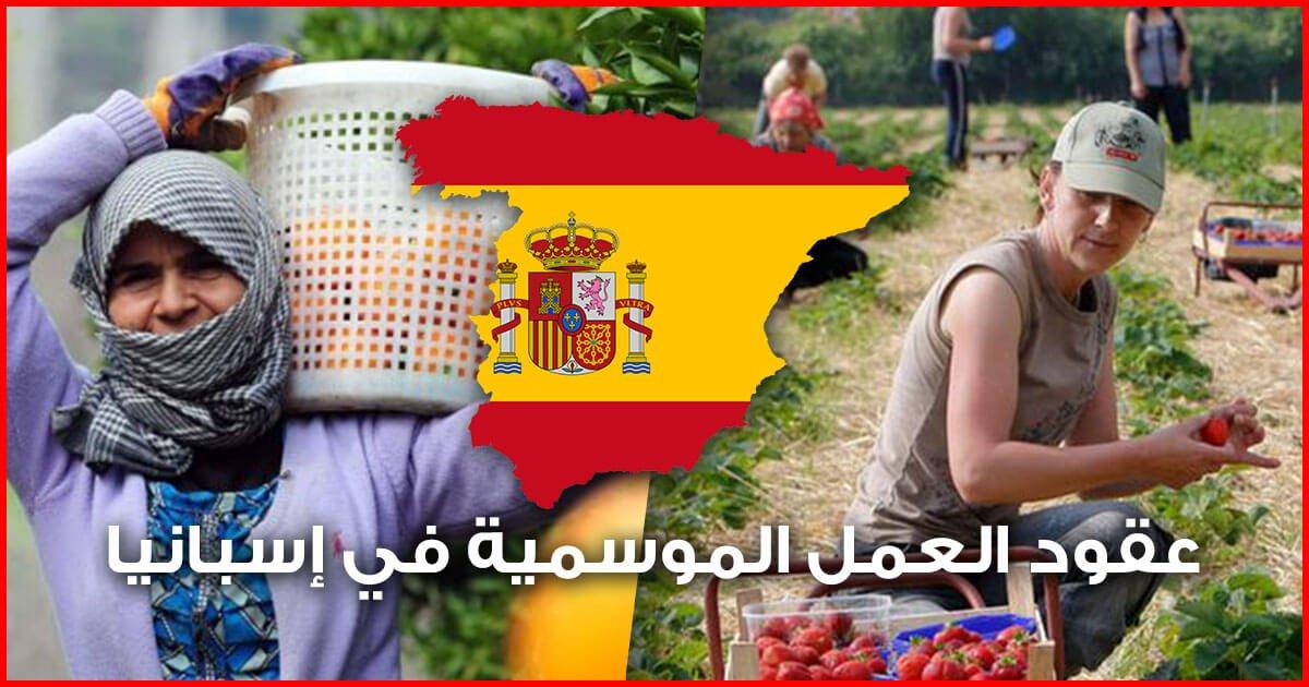 عقود العمل الموسمية في إسبانيا ..أكثر من 10 آلاف عقد عمل لمزارعين مغاربة ( بالكونطرا )