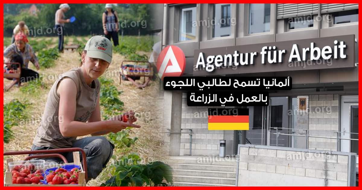ألمانيا تسمح لطالبي اللجوء بالعمل في الزراعة