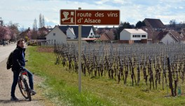 Route de Vin d'Alsace