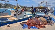 Fischernetze Port d'Antratx