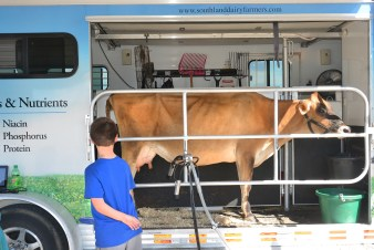 Gus Singleton looks at a dairy cow demonstration during the City Farm Festival. (Photo by Robin Hart)