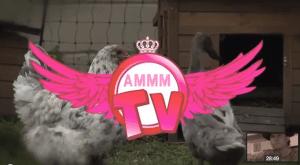 AMMMTV