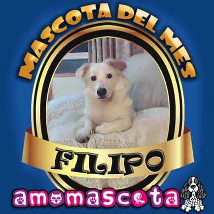 MASCOTA-DEL-MES-FILIPO