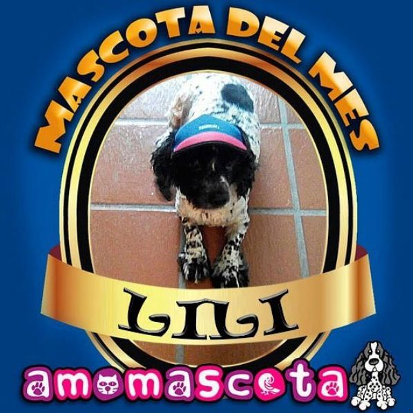 MASCOTA-DEL-MES-LILI