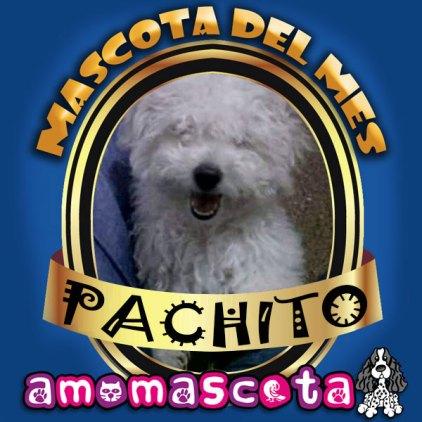 MASCOTA-DEL-MES-PACHITO
