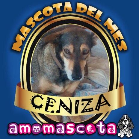 MASCOTA-DEL-MES-CENIZA