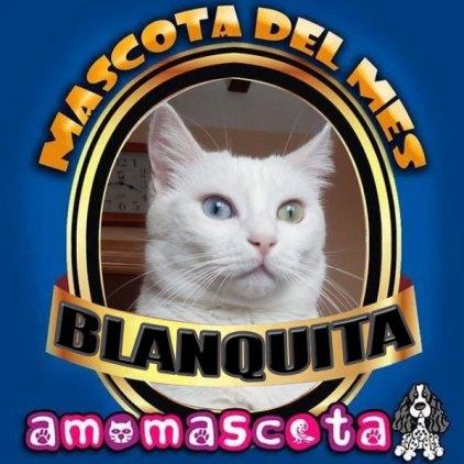 BLANQUITA-MASCOTA-DEL-MES