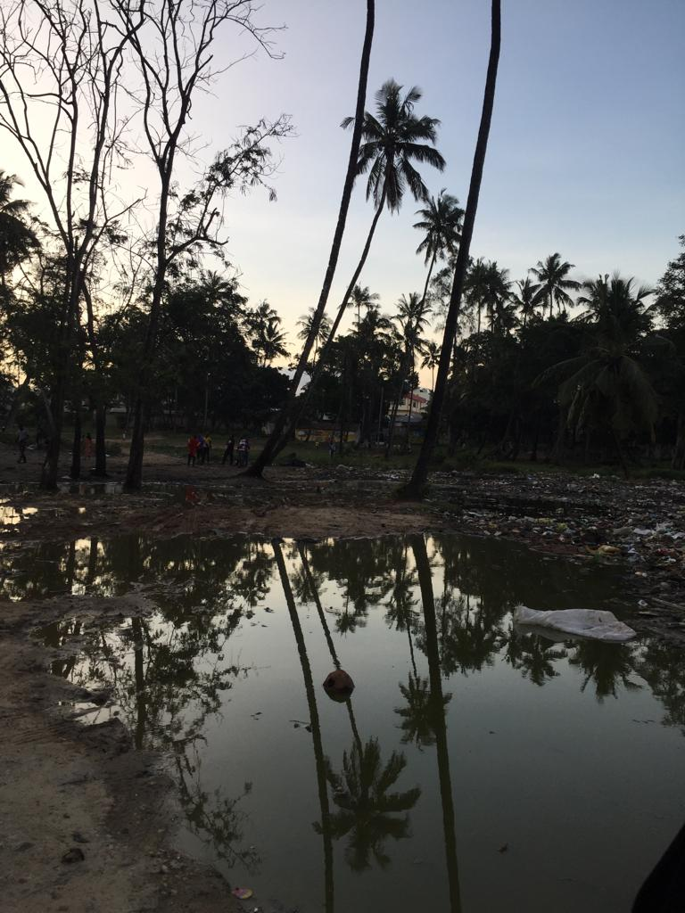 A muddy pool of water against a backdrop of palm trees - spare a thought for our city