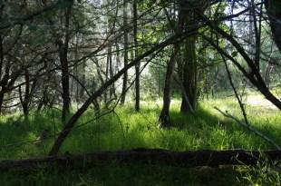 FairyForest
