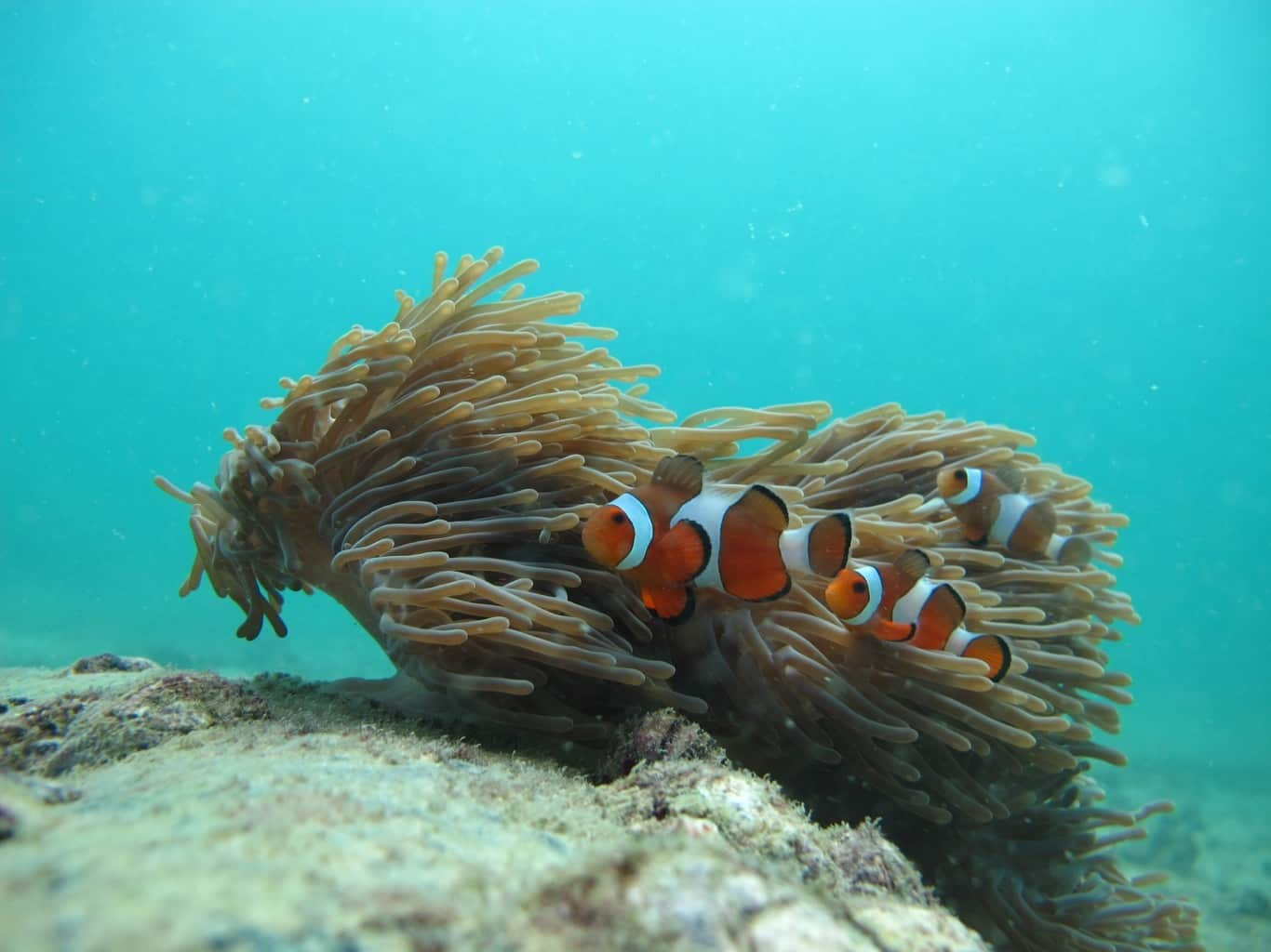 Séjour en couple à Ao Nang Les îles de Krabi Koh Phi Phi Nemo snorkeling