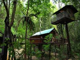 KS tree house 1