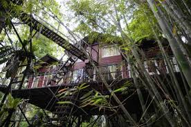 KS tree house 2