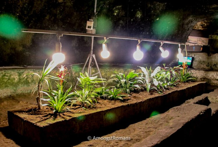 plant growing under lamps