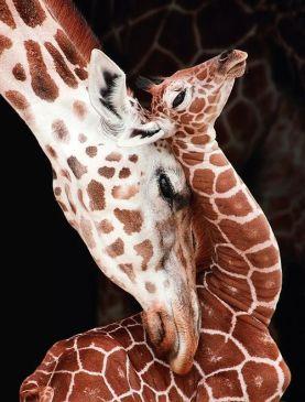 Jirafa y bebé