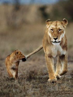 Leona y bebé