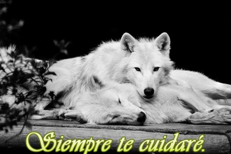 Lobo Frases Frases T Frases Lobos Y Wolf