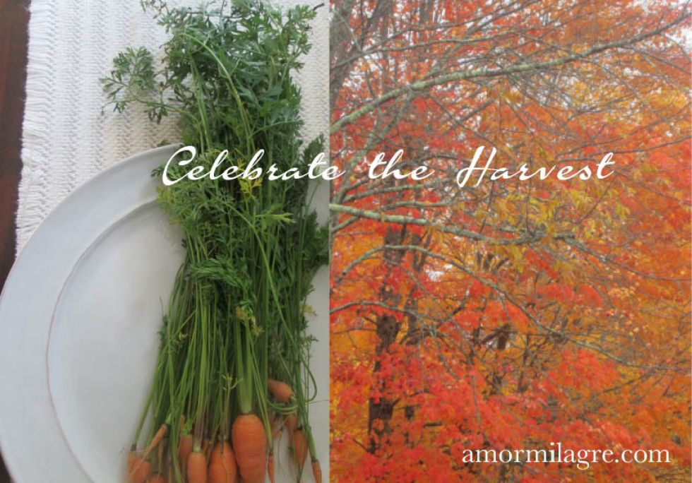 Your Own Harvest Festival Recipe and Photography by amormilagre.com Organic Recipes, Paleo, Healthy. Artwork, Stationery, Organic Apparel, and Custom Gifts.