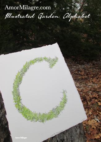 Amor Milagre Illustrated Garden Alphabet Letter C Green Leaf 2 custom initials name word amormilagre.com