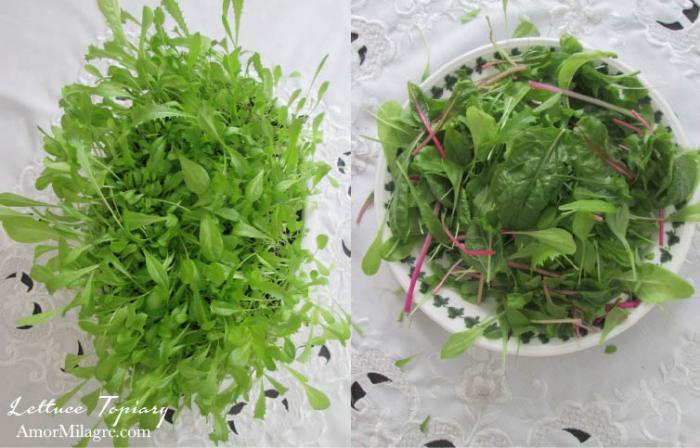 Amor Milagre Lettuce Topiary Easter Egg Organic Garden Spring 2018 Organic Vegan, Art & Design amormilagre.com
