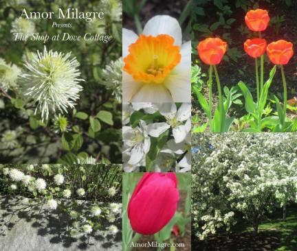 Amor Milagre Shop Homepage Spring 2018 Art Design Organic Life Apparel Baby amormilagre.com