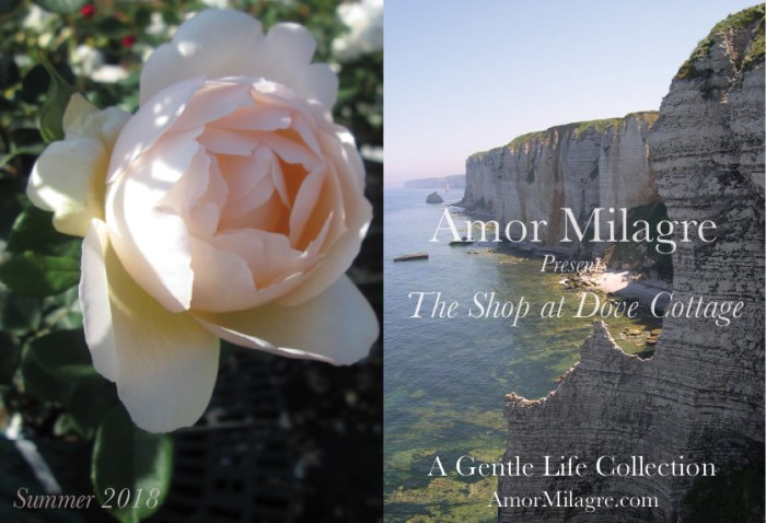 Amor Milagre The Shop at Dove Cottage Homepage Summer 2018 Art Design Organic Life Apparel Baby Rose Photography Fine Art Print David Austin Rose France Beach amormilagre.com