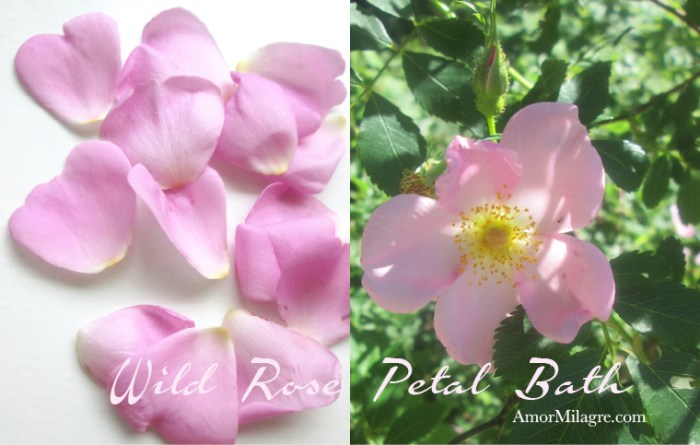 Amor Milagre Presents Wild Rose Petal Bath organic home, garden, healthy lifestyle amormilagre.com