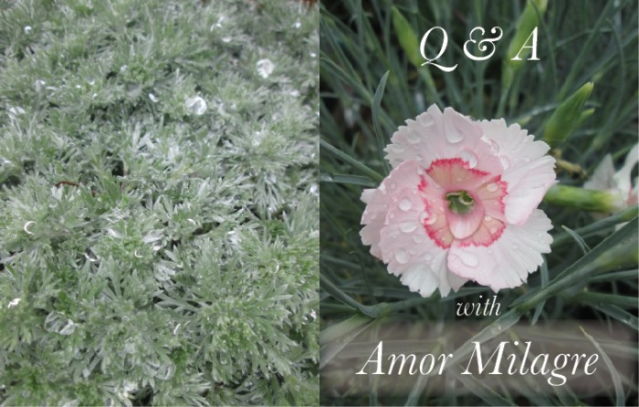 Amor Milagre Q&A Interview 2019 Pink Dewdrop Flower Favourite Series Non-Toxic Health Spring Ethical Organic Gift Shop Handmade Gift Shop Art Vegan Baby & Child amormilagre.com