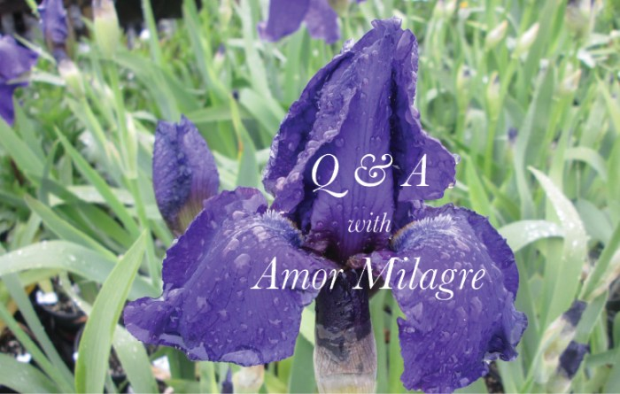 Amor Milagre Q&A Interview 2019 Purple Iris Flower Favourite Series Non-Toxic Health Spring Ethical Organic Gift Shop Handmade Gift Shop Art Vegan Baby & Child Dewdrop amormilagre.com