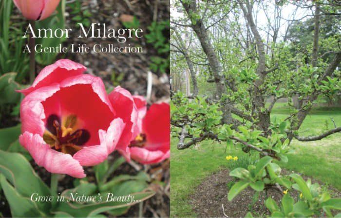 Amor Milagre Art Print SALE! Art Gallery Baby & Child Nursery May Gardening 2019 Spring Flowers Bulbs Pink Tulips Romance tree blossom Ethical Organic Gift Shop Handmade Gift Shop amormilagre.com