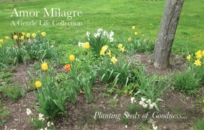 Amor Milagre Art Print SALE! Art Gallery Baby & Child Nursery May Gardening 2019 Spring Flowers Bulbs plant seeds of goodness Ethical Organic Gift Shop Handmade Gift Shop amormilagre.com