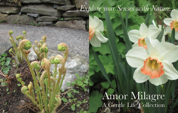 Amor Milagre Art Print SALE! Art Gallery Baby & Child Nursery May Gardening 2019 Spring Orange White Daffodils Flowers Fiddleheads Ethical Organic Gift Shop Handmade Gift Shop amormilagre.com