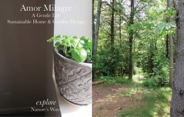 Amor Milagre Custom Built Home Interior Design Moments Goodnight, Dove Cottage 2019 Ethical woods basil plant amormilagre.com