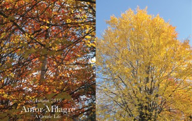 Amor Milagre Home & Garden Renovation Design Diaries & Tips Planting Spring Flower Bulbs & Seeds in Autumn Trees Golden Leaves Ethical Gift Shop amormilagre.com