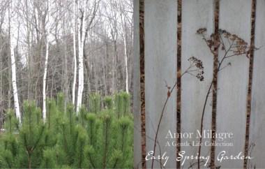 Amor Milagre Early Spring Garden Rose Cottage 6 2020 Ethical Organic Gift Shop Handmade Art amormilagre.com
