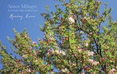 Amor Milagre Blossoming Spring Love Garden Rose Cottage 2020 Ethical Organic Gift Shop amormilagre.com