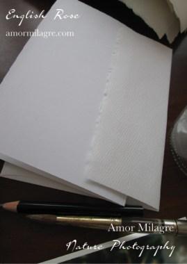 White English Rose Nature Photography Art Print Greeting Card Amor Milagre amormilagre.com