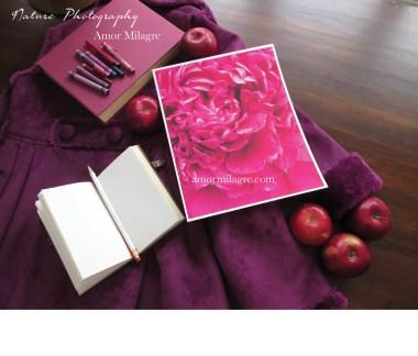 Amor Milagre Magenta Peony Flower Petals nature photography amormilagre.com 1